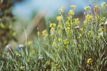 Spring flower 14
