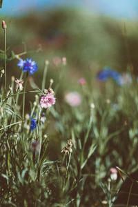 Spring flower 15