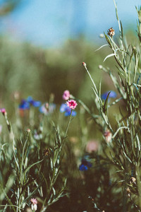 Spring flower 16