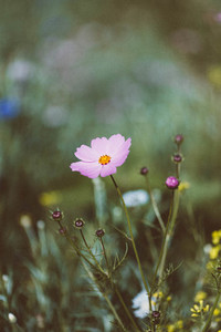Spring flower 17