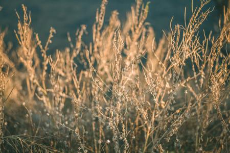 Dry Grass Field