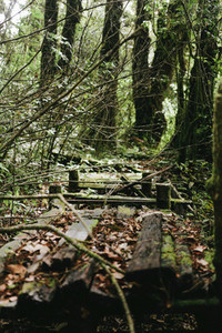Old wooden bridge in forest