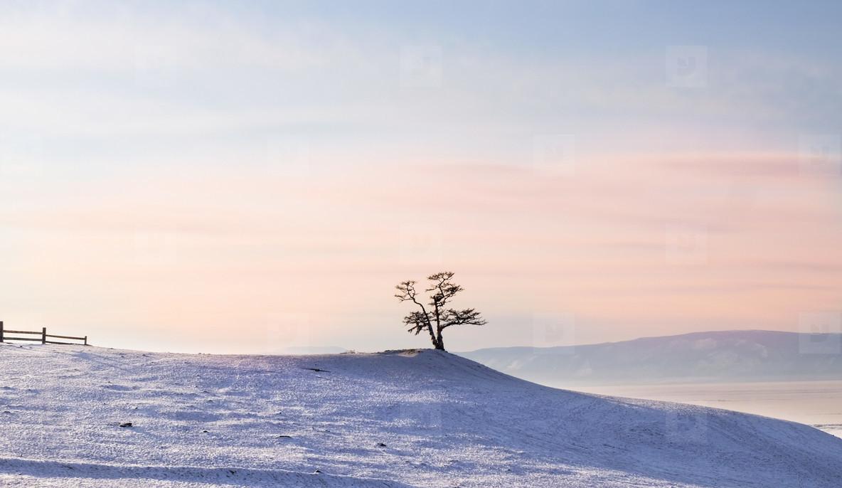 Tree on Cape Burhan  Baikal Lake