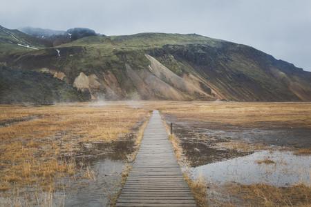 Icelandic Highland 14