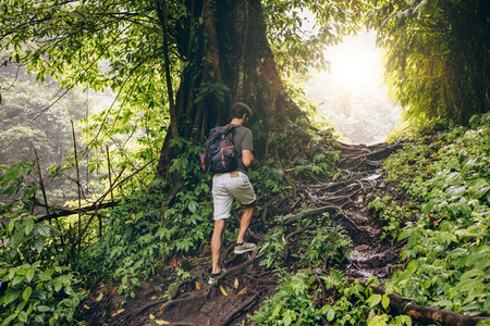 People hiking in tropical jungle