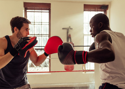 Trainer helping boxer punch in gym