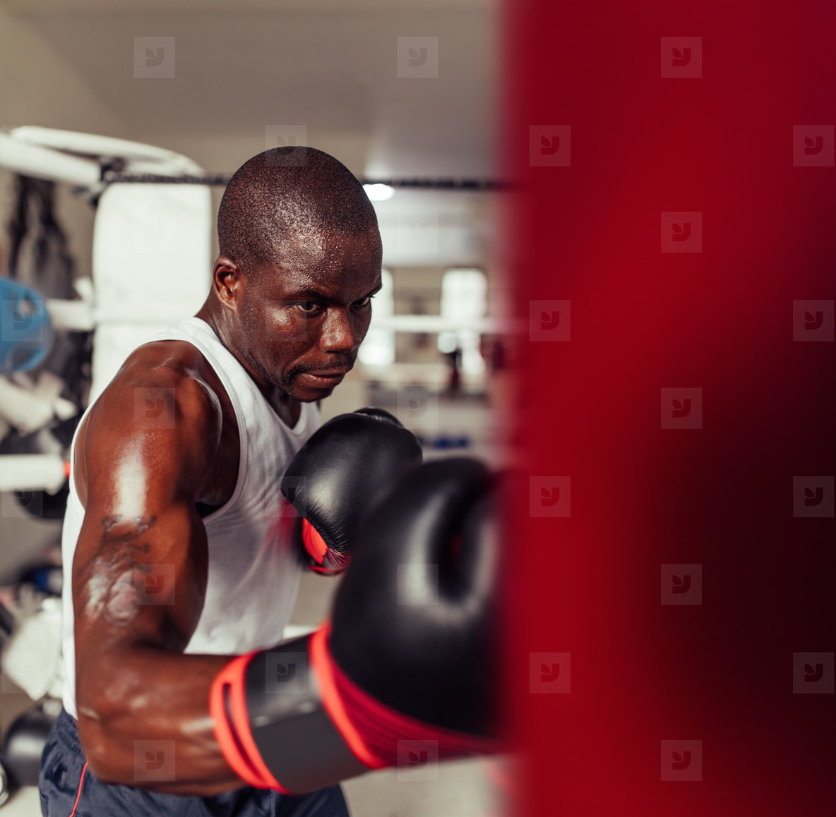 Strong muscular sweaty boxer working out