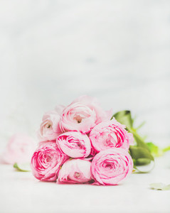 Light pink spring ranunkulus flowers on marble background