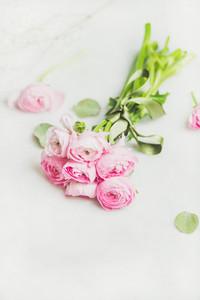 Light pink spring ranunkulus flowers on white marble background
