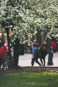 Spring tree blossom in Budapest city center in Pest ditrict