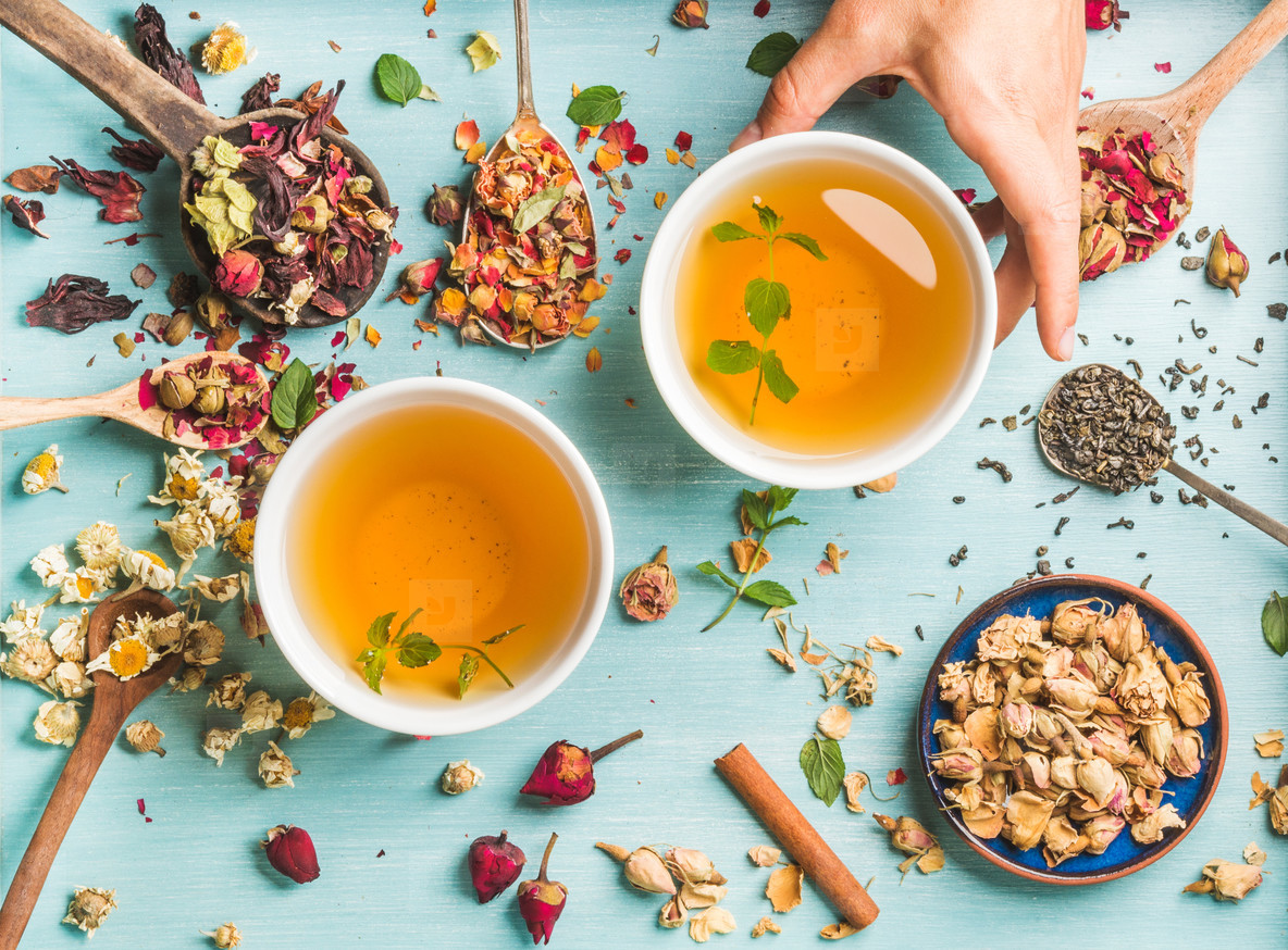 Two cups of healthy herbal tea with mint  cinnamon  dried rose and camomile flowers in different spoons  woman s hand holding one cup over blue background