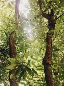 Sun shining through of tree leaf