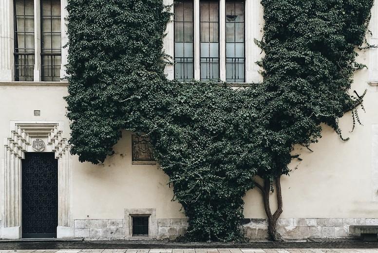 Green leaf covered wall