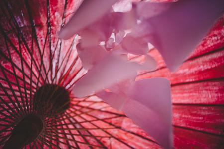 Asian Umbrellas 8