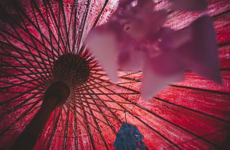 Asian Umbrellas 10