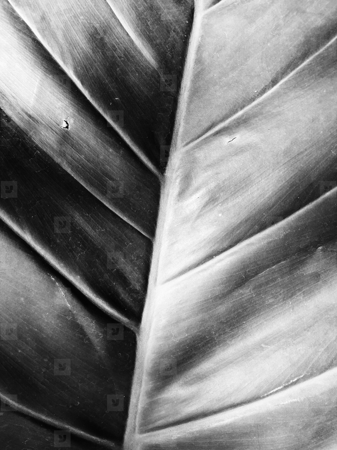 Close up of leaf