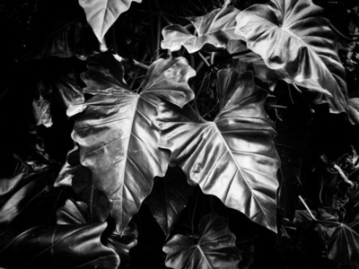 Green leaves in dark lighting