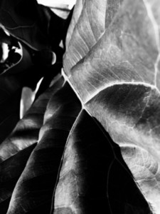 Abstract Leaf Texture 06