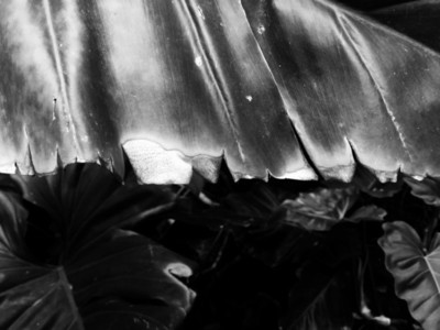 Abstract Leaf Texture 08