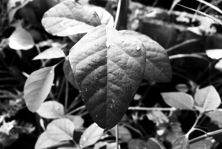 Abstract Leaf Texture  13