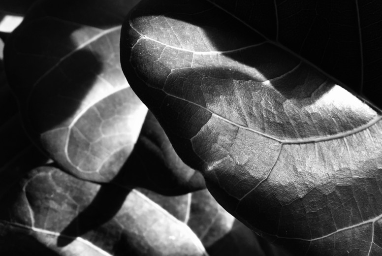 Abstract Leaf Texture  15