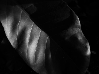 Abstract Leaf Texture 19