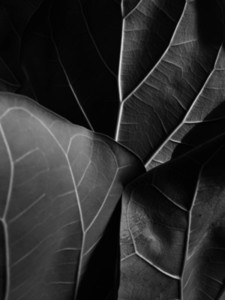 Abstract Leaf Texture  20