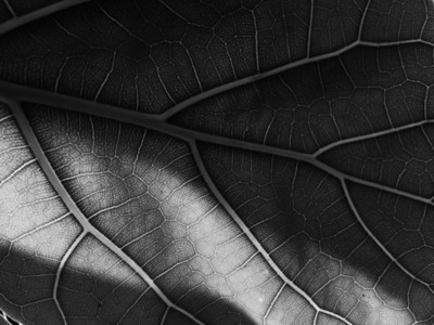 Abstract Leaf Texture 21