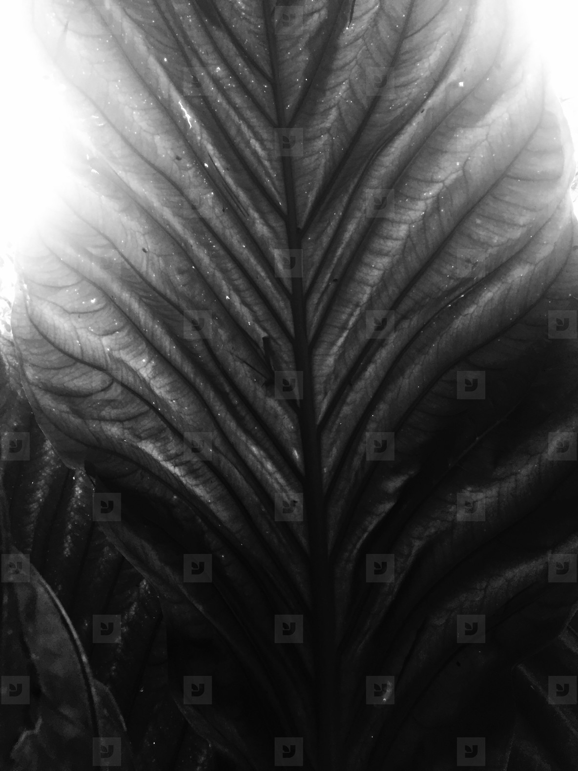Abstract Leaf Texture  22