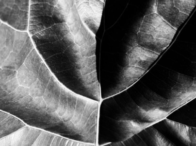 Abstract Leaf Texture 24