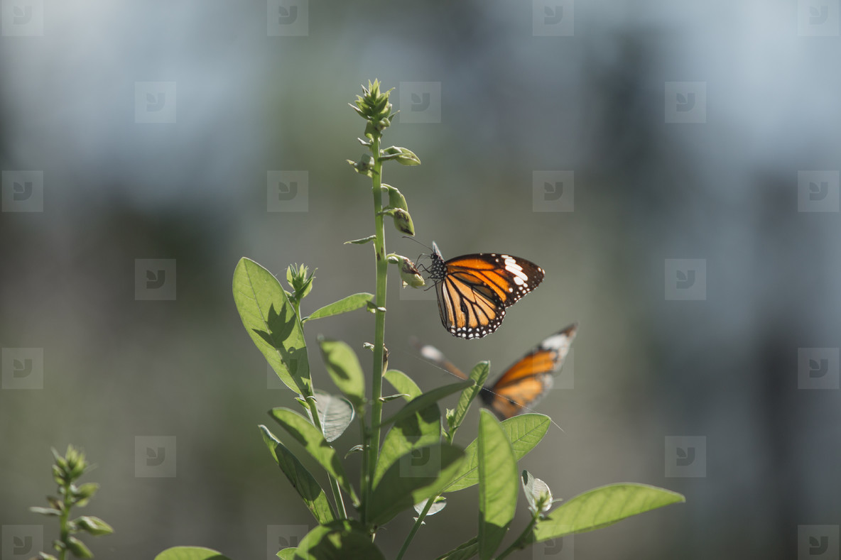 Butterfly in natural