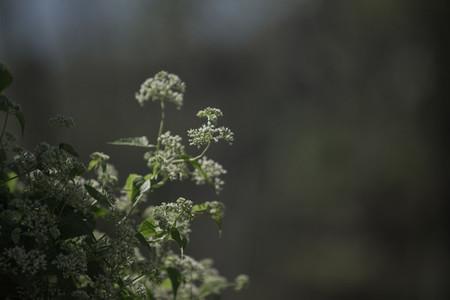 Summer field plants