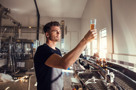 Young man examining the quality of craft beer at brewery