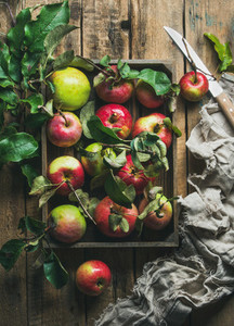 Seasonal garden harvest apples with green leaves in wooden tray