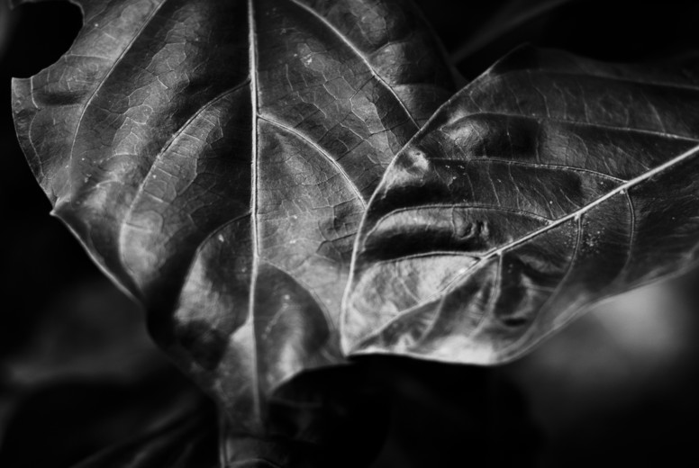 Abstract Leaf Texture  25
