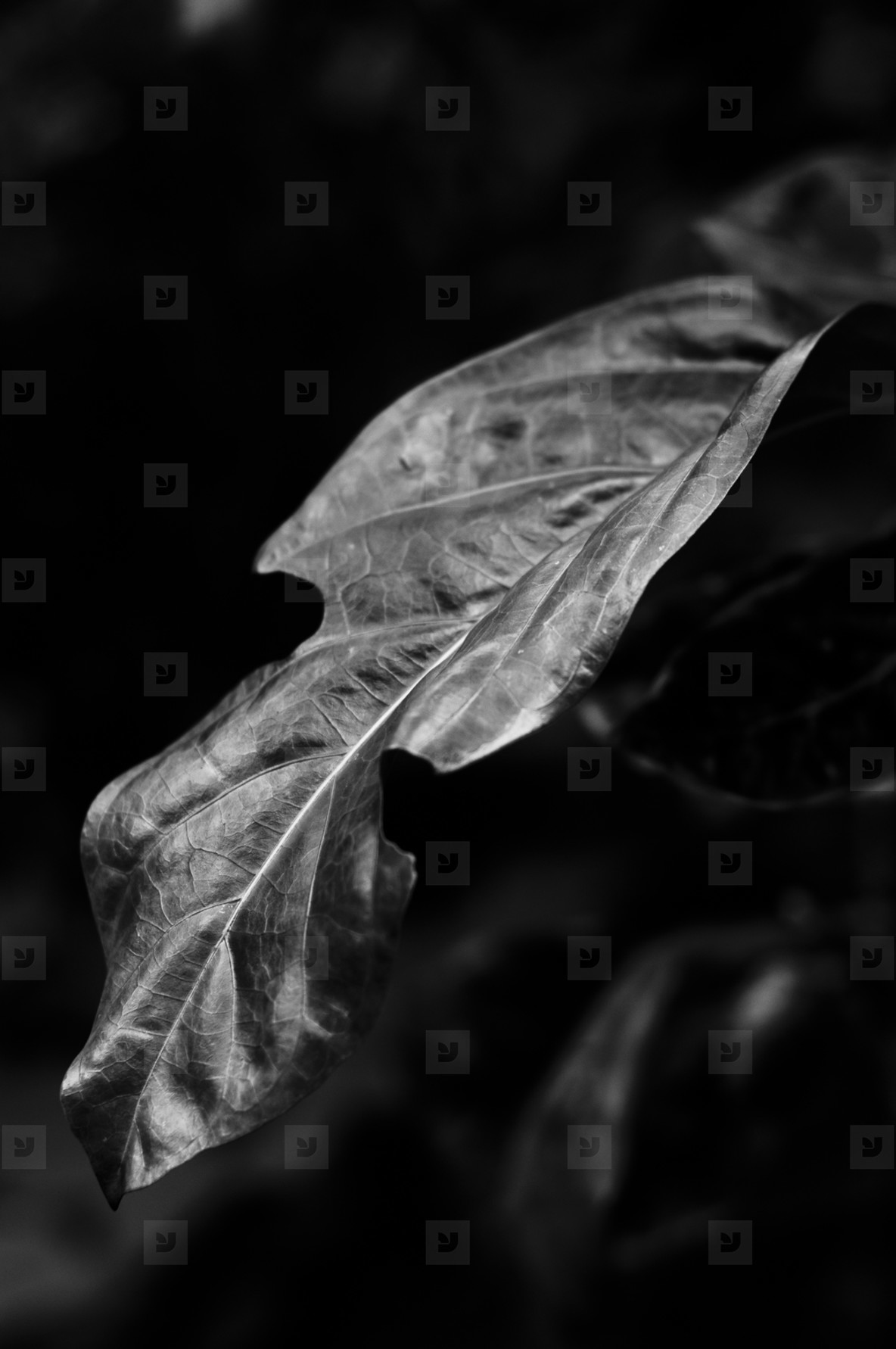 Abstract Leaf Texture  26