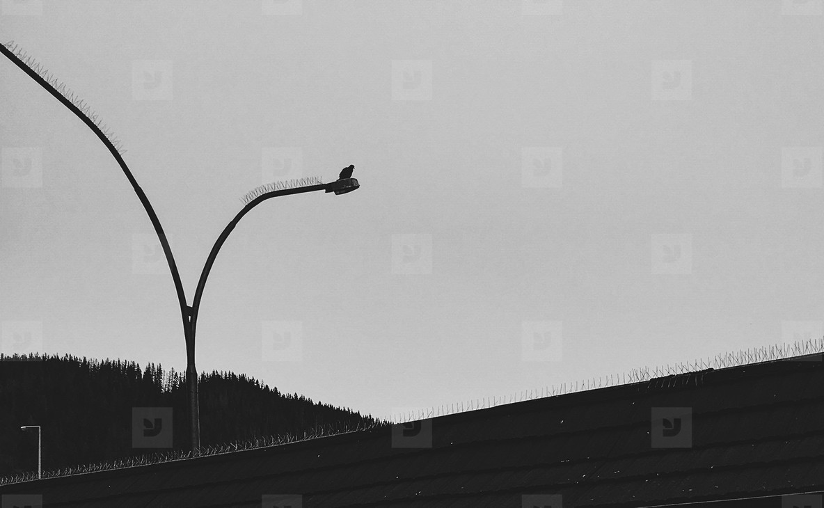 Bird on Lampost