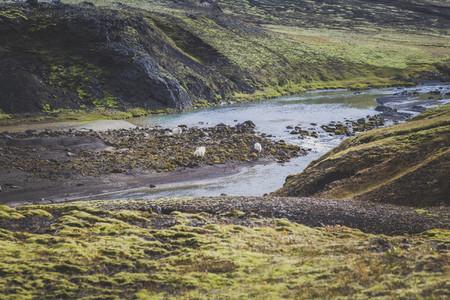 Icelandic 12