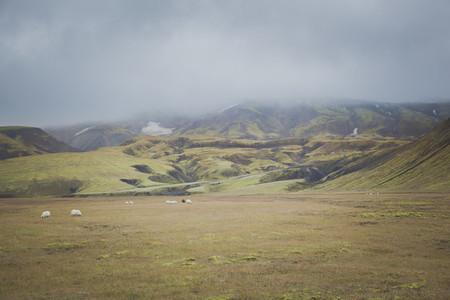 Icelandic 16