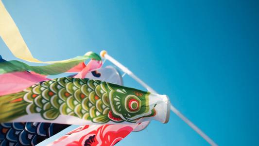Japanese koinobori fish flag