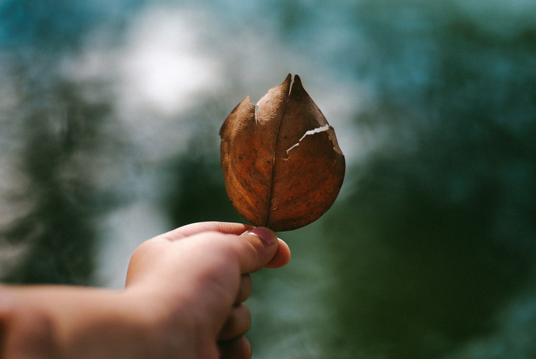 Hand holding dry leaf