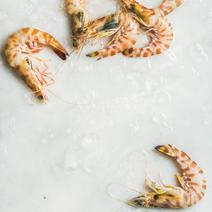 Uncooked tiger prawns on chipped ice  square crop