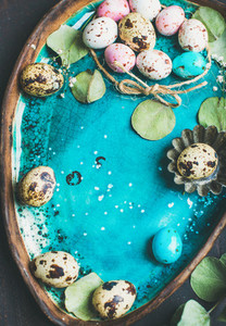 Colorful quail eggs  flowers  leaves for Easter over blue tray