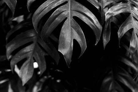 Natural Texture 01