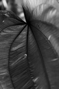 Natural Texture 04