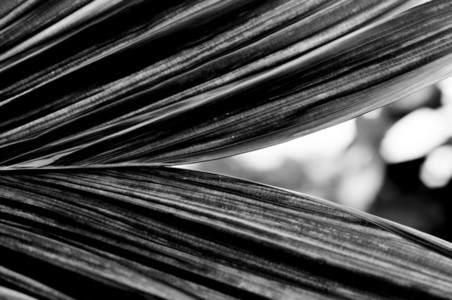 Abstract leaf texture 02