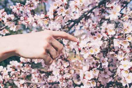 Hand touching flowers