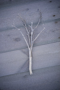 Driftwood 15