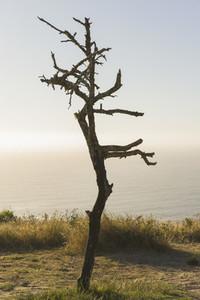 Driftwood 35