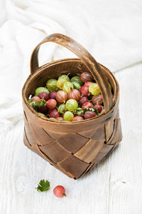 Birchbark basket full of ripe green and red gooseberries